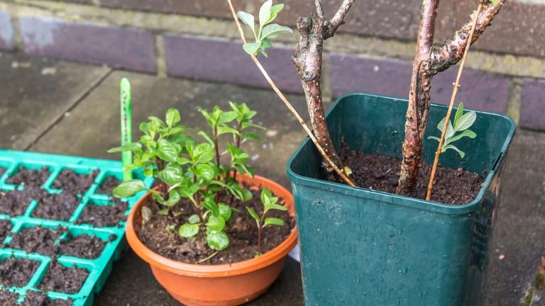 Bloxwich Scented Garden0007
